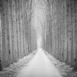 Wim Lanclus - Tree Lane