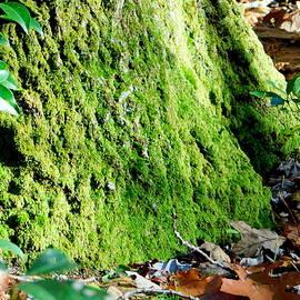 Tree Moss by Arlane Crump