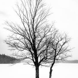 Alan Brown - Tree On Frozen Lake part 2