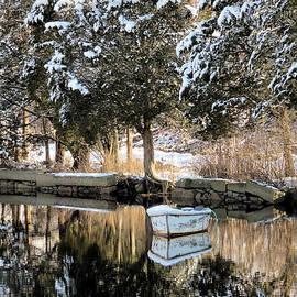 Janice Drew - Tree Reflections
