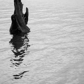 Tree Reflections, Rest In The Water by Trance Blackman