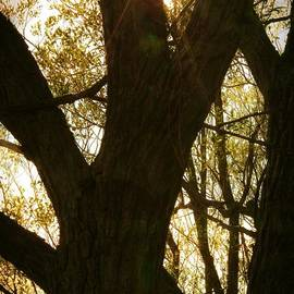 Tatiana Travelways - Tree silhouette with sunburst