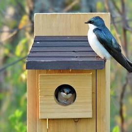 Tree Swallow Nest by Lyuba Filatova