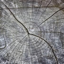 Tree Textures - Martin Newman