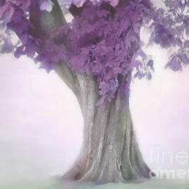 Hal Halli - Treeness in Mauve