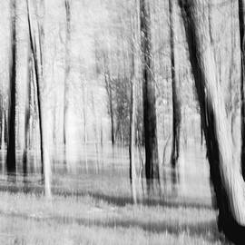 Michael Hills - Trees  - abstraction in black and white