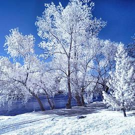 Trees Along the Krka by Norman Gabitzsch