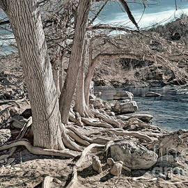 Trees Along The Pedernales by Norman Gabitzsch
