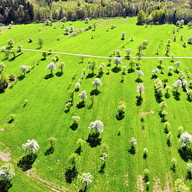 Matthias Hauser - Trees and meadow in spring aerial view