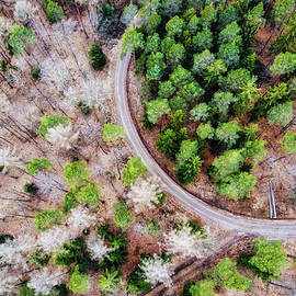 Trees And Path From Above Drone Photography by Matthias Hauser