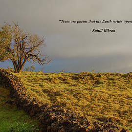 Trees Are The Poem That The Earth Writes upon The Sky by Venetia Featherstone-Witty