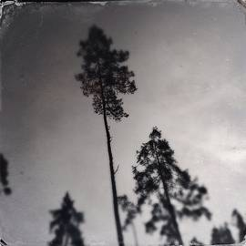 Trees Black And White Wetplate by Matthias Hauser