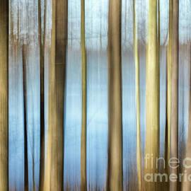 Trees by Rod Best