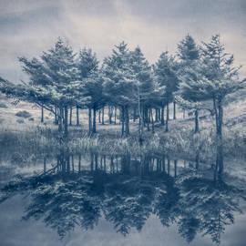 Debra and Dave Vanderlaan - Trees in Blue