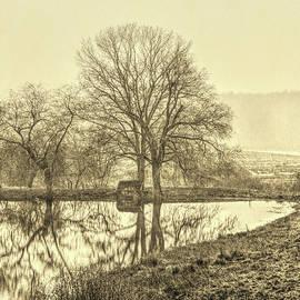 David Smith - Trees in fog Kennebunk Maine Sepia