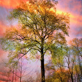 Trees in the Brilliance of Evening by Debra and Dave Vanderlaan