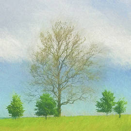 Jeff Oates Photography - Trees in the Fields