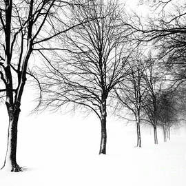 Mioara Andritoiu - Trees In Winter 2