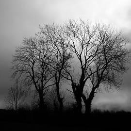 James Clancy - Trees