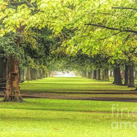 Trees by Jim Lepard