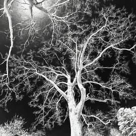 Trees Sky and Sun AP by Dan Carmichael