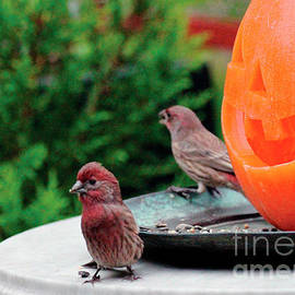 House Finches Trick Or Treating by Patricia Youngquist