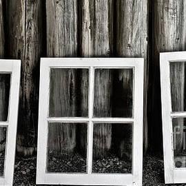 Trio by Brad Allen Fine Art