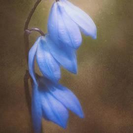 Scott Norris - Trio of Spring Flowers