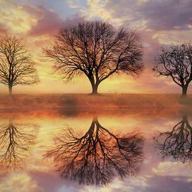 Lori Deiter - Trio of Trees
