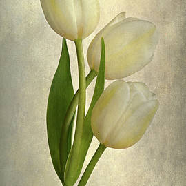Cindy Carter Photography - Trio of White Tulips