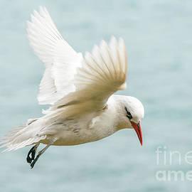 Werner Padarin - Tropic Bird 4