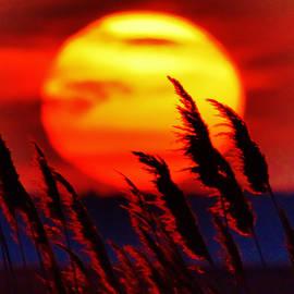 William Bartholomew - Tropic Sunset