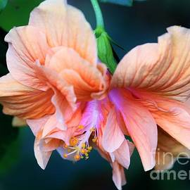 Diann Fisher - Tropical Beauty