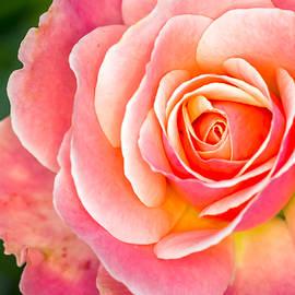 Tropical flowers 6 by Jijo George