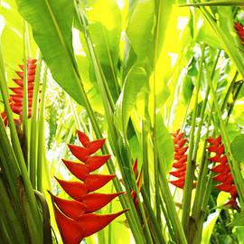 Olivia Novak - Tropical Garden Blooms 5142 2