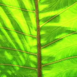 Tropical Green Leaf Texture by Charmian Vistaunet