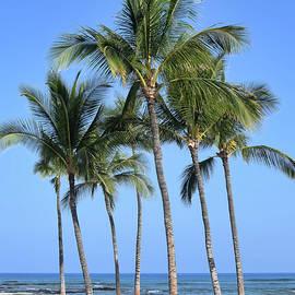 Tropical Hawaiian Day by Pamela Walton