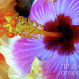 Tropical Hibiscus by Jenny Lee