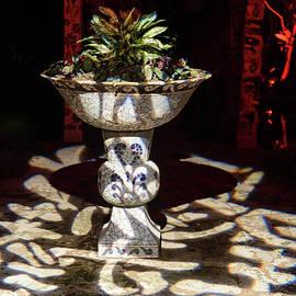 Tropical Light Play by Carol Lloyd
