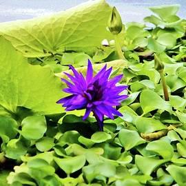 Cynthia Guinn - Tropical Purple Flower