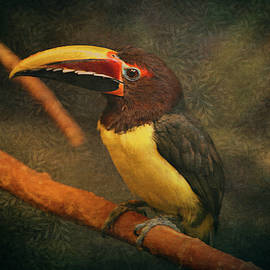 Tropical Rainforest Toucan  by Maria Angelica Maira