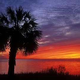 Daniel Dempster - Tropical Sunset - FS000214