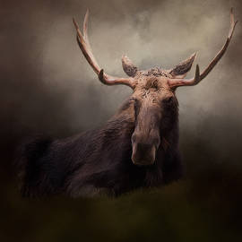 True North - Wildlife Art by Jordan Blackstone