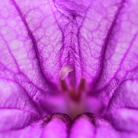 Akhyana - Trumpet flower abstract