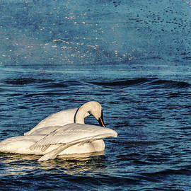 Trumpeter Swan Journey by Patti Deters