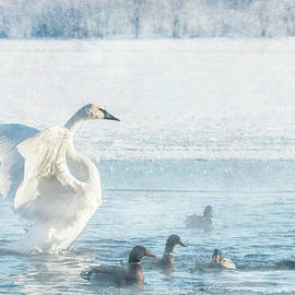 Patti Deters - Trumpeter Swan with Ducks #2/2