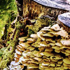 Trunk And Mushrooms by Alessandro Della Pietra