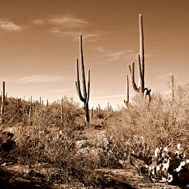 Tucson glory by Ruth Jolly