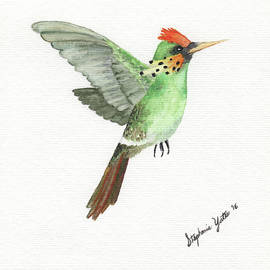 Stephanie Yates - Tufted Coquette Hummingbird