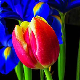 Tulip And Iris - Garry Gay